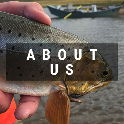Closeup of a cutthroat trout About Us button