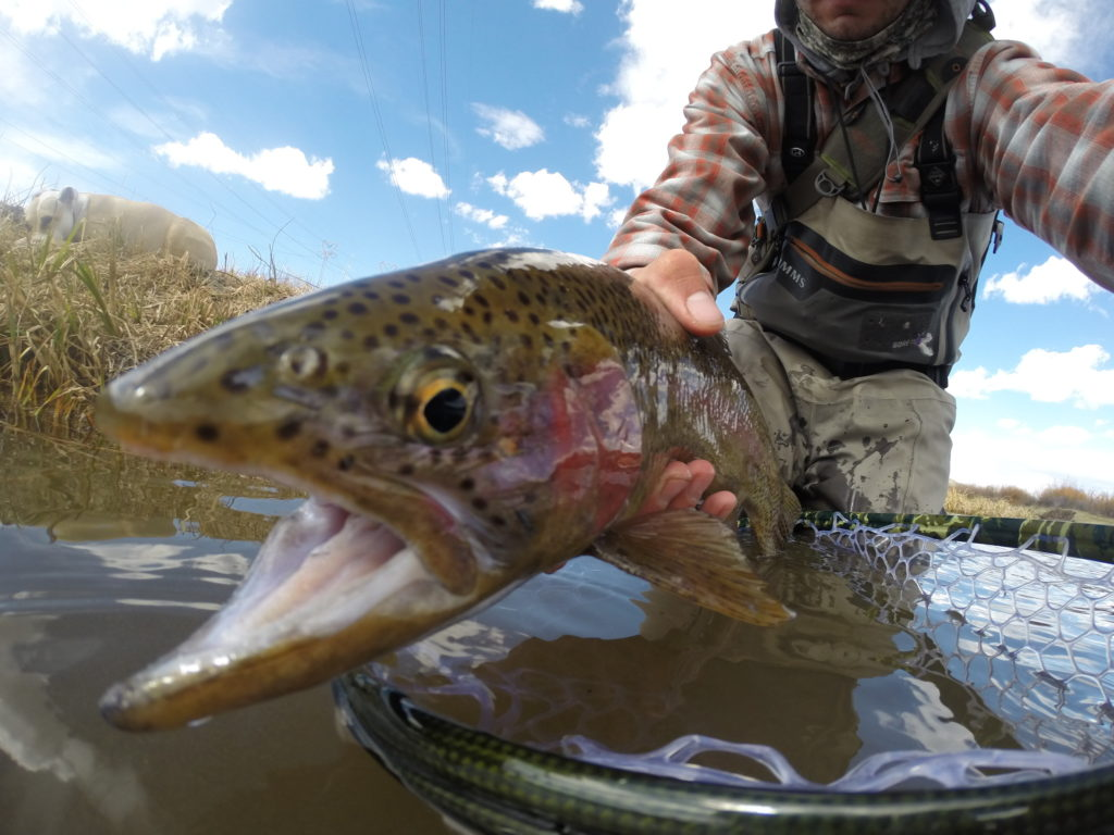 Lower provo river fishing reports fly fishing conditions for Provo river fishing report