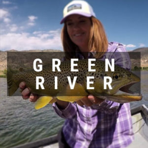 Angler holding a Green River Brown Trout