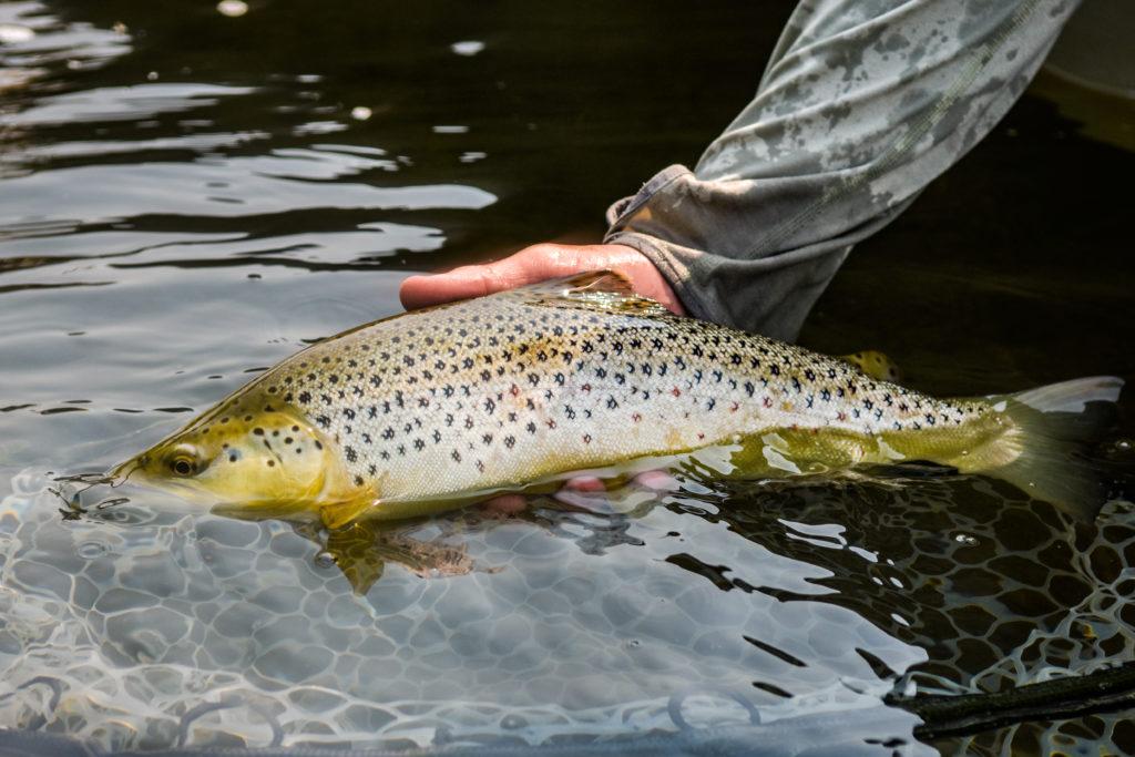 Utah fly fishing report current river conditions hatches for Utah fly fishing report
