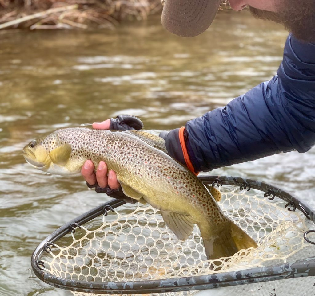 Sustianable Consumer Guide Fishing: Green River Fishing Reports
